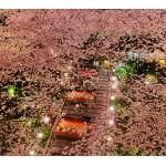 高輪エリアのプリンスホテルにて「高輪桜まつり2018」開催!