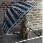 憂鬱な梅雨をハッピーに!おすすめ最新レイングッズ3選