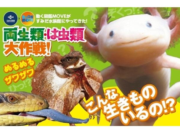 すみだ水族館に驚きの生態を持つ両生類・は虫類が大集合!