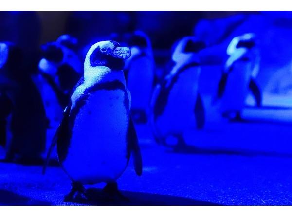 3日間限定!京都水族館で「冬の夜のすいぞくかん」開催