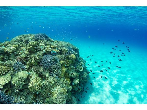 楽しみながら自然保護に貢献!沖縄「サンゴ保護活動プラン」