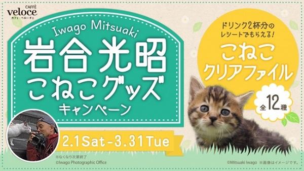 カフェ・ベローチェなどで「岩合光昭こねこグッズキャンペーン」開催中!