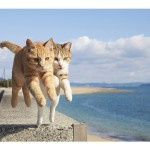 """今話題の""""飛び猫""""って?猫好き必見の写真集発売!"""