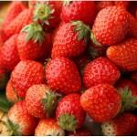 銘柄いちごの食べ比べも。いちごデザート食べ放題も。上野のブッフェレストラン「大地の贈り物」にて『いちごフェア』3月1日(日)から開催