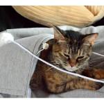ネコをカンガルーのようにおなかにIN!いつもネコと一緒にいたいあなたに「にゃんガルーパーカー 」