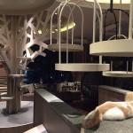 おしゃれすぎる猫カフェが渋谷の見晴らし最高の中にオープン!すべて子猫たちなので遊べる確率大