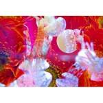 すみだ水族館で幻想的なクラゲアートが楽しめる!蜷川実花さんとのコラボ企画開催‼