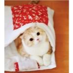 SNSで癒される人が大量発生の予感、「猫のお布団」が登場!これはたまらないニャン‼