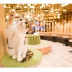 20匹の猫がお出迎え!人気のおしゃれすぎる猫カフェ