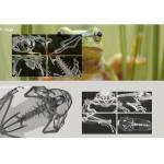身近な生物が丸裸に!?新サイト「CT生物図鑑」開設